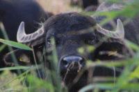 Naturschutz Aktivitäten bei Helmsgard